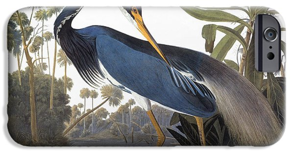 Audubon iPhone Cases - Audubon: Heron, 1827 iPhone Case by Granger