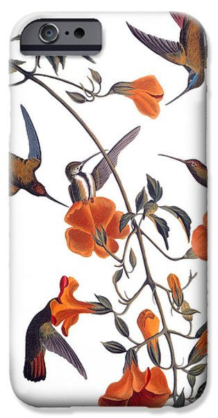 Audubon iPhone Cases - Audubon: Hummingbird iPhone Case by Granger