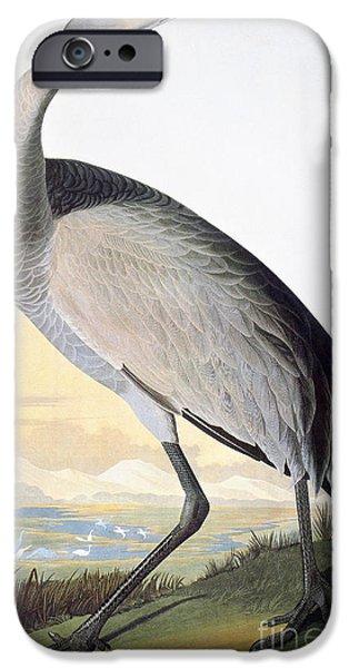 Zoology iPhone Cases - Audubon: Sandhill Crane iPhone Case by Granger