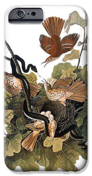 Serpent iPhone Cases - Audubon: Thrasher iPhone Case by Granger
