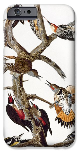 Hairy Woodpecker iPhone Cases - Audubon: Woodpeckers iPhone Case by Granger