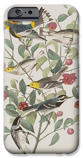 Audubon iPhone Cases - Audubons Warbler Hermit Warbler Black-throated gray Warbler iPhone Case by John James Audubon