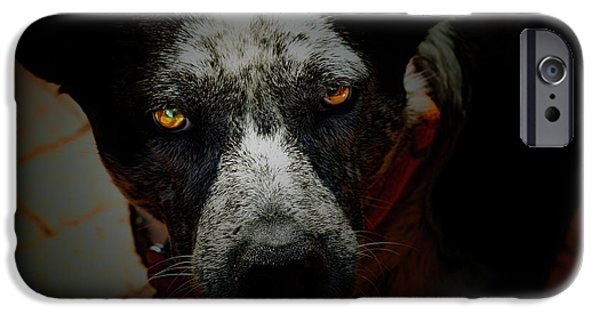 Cattle Dog iPhone Cases - Australian Cattle Dog iPhone Case by Steven  Digman