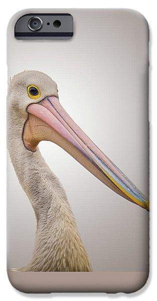 One iPhone Cases - Australian Pelican iPhone Case by Wim Lanclus