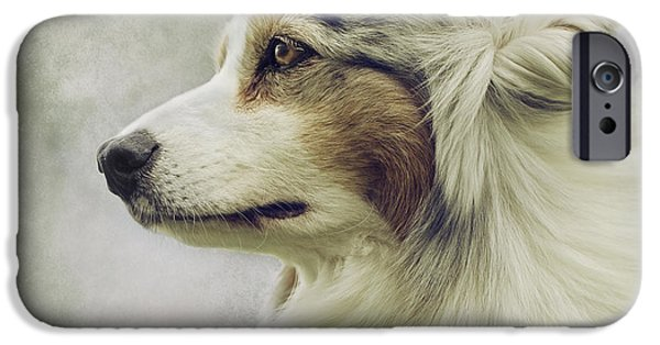 Working Breed iPhone Cases - Australian Shepherd Portrait 1 iPhone Case by Wolf Shadow  Photography
