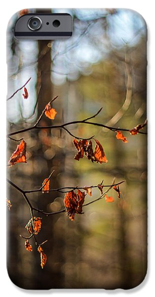 Autumn iPhone Cases - Autumn 2 iPhone Case by Baciu Isabelle Nicoleta