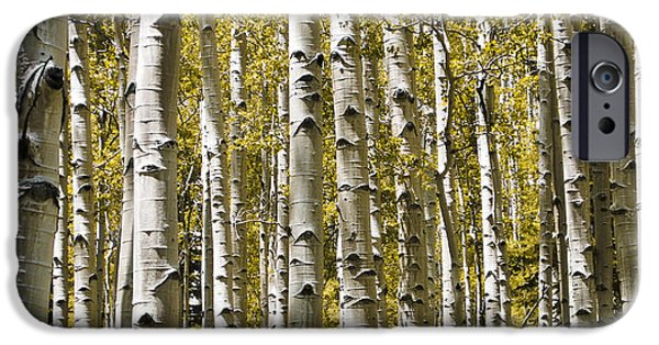 Nature Study iPhone Cases - Autumn Aspens iPhone Case by Adam Romanowicz