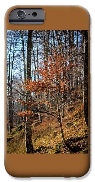 Autumn iPhone Cases - Autumn iPhone Case by Baciu Isabelle Nicoleta