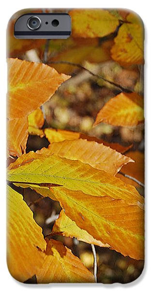 Autumn Beech  iPhone Case by Michael Peychich