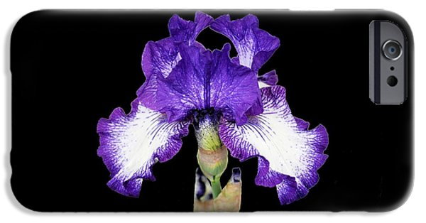 Michelle iPhone Cases - Autumn Circus Iris iPhone Case by Michelle McPhillips