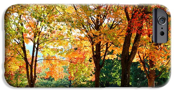 Pathway iPhone Cases - Autumn Colors In The Park iPhone Case by Athena Mckinzie