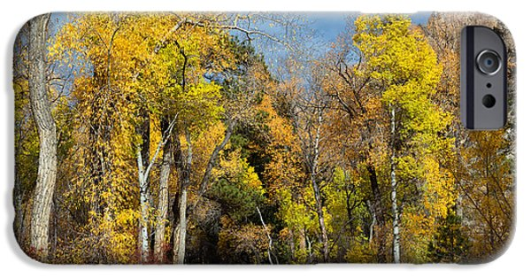 Pines iPhone Cases - Autumn Creek iPhone Case by Kathleen Bishop