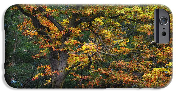 Nature Abstract iPhone Cases - Autumn day iPhone Case by SK Pfphotography