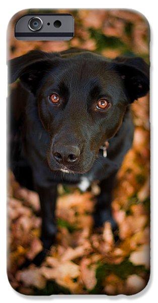 Autumn Dog iPhone Case by Adam Romanowicz