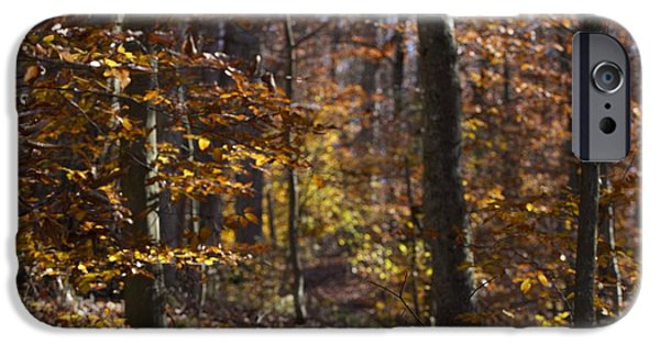 Autumn iPhone Cases - Autumn Forest iPhone Case by P Jeff Smith