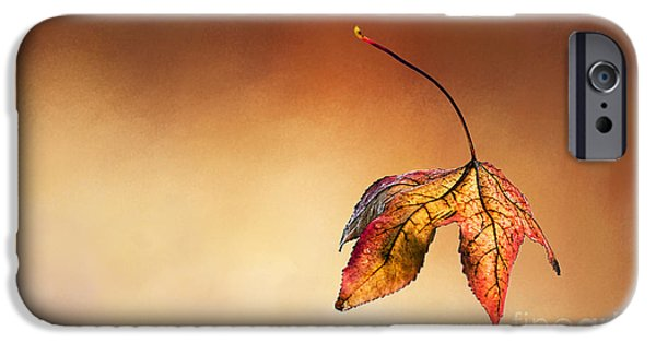 Colors Of Autumn iPhone Cases - Autumn Leaf Fallen iPhone Case by Kaye Menner