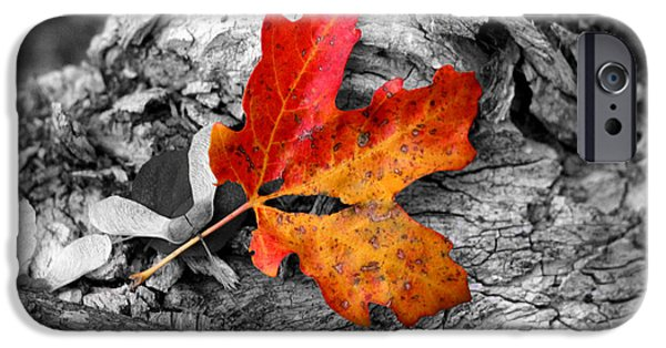 Epic iPhone Cases - Autumn Leaf iPhone Case by Flat Owl Photo