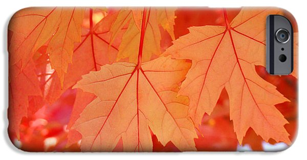 Autumn iPhone Cases - AUTUMN LEAVES Art Prints Orange Fall Leaves Baslee Troutman iPhone Case by Baslee Troutman