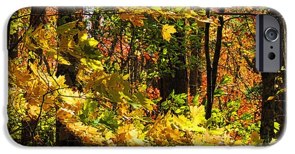 Tree Art Print iPhone Cases - Autumn Leaves by H H Photography of Florida iPhone Case by HH Photography of Florida