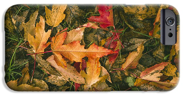 Fallen Leaves iPhone Cases - Autumn leaves iPhone Case by Thubakabra