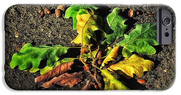 Nature Abstract iPhone Cases - Autumn LF iPhone Case by SK Pfphotography