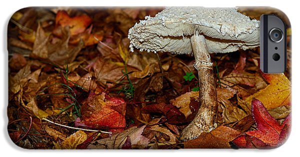 Autumn iPhone Cases - Autumn Mushroom iPhone Case by Kaye Menner
