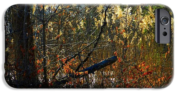Fall Scenes iPhone Cases - Autumn on the Sough iPhone Case by Julie Dant