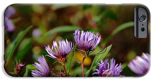 Disc iPhone Cases - Autumn Purple iPhone Case by Debbie Oppermann