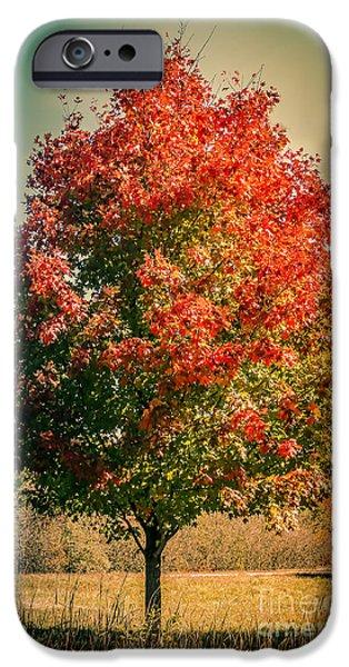 Autumn iPhone Cases - Autumn splendor iPhone Case by Claudia Mottram