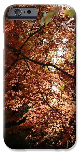 Spokane iPhone Cases - Autumn Sunshine Poster iPhone Case by Carol Groenen