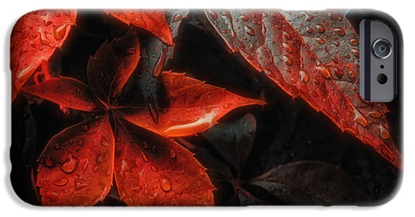 Colorful Abstract iPhone Cases - Autumn time leaves iPhone Case by SK Pfphotography