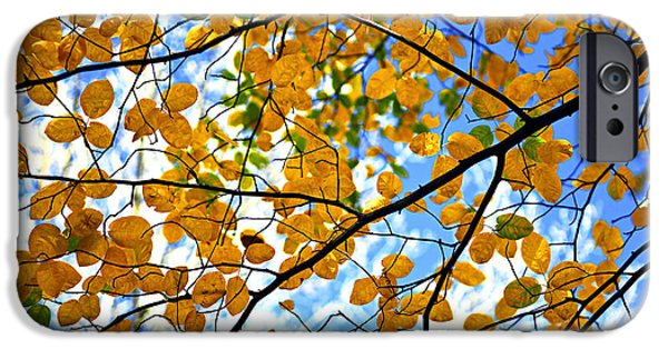 Yellow Leaves iPhone Cases - Autumn tree branches iPhone Case by Elena Elisseeva