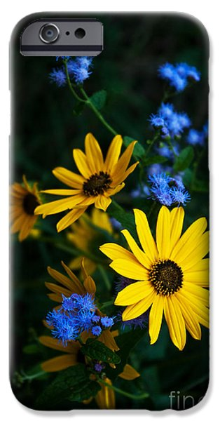Floral Photographs iPhone Cases - Autumn Wildflowers iPhone Case by Lisa Holmgreen