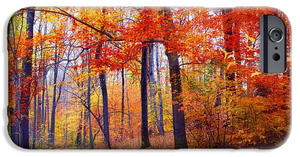 States iPhone Cases - Autumn Woodland Trail iPhone Case by Jessica Jenney