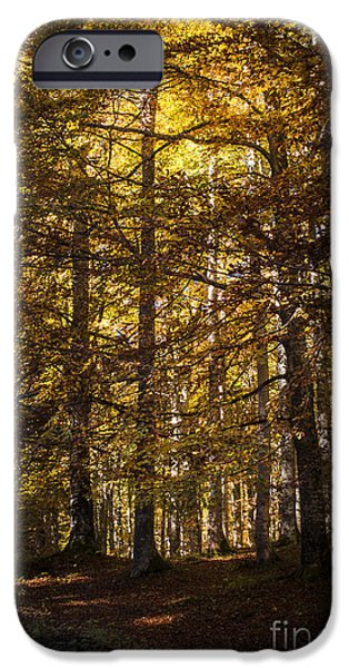 Nature Scene iPhone Cases - Autumnal forest iPhone Case by Yuri Santin