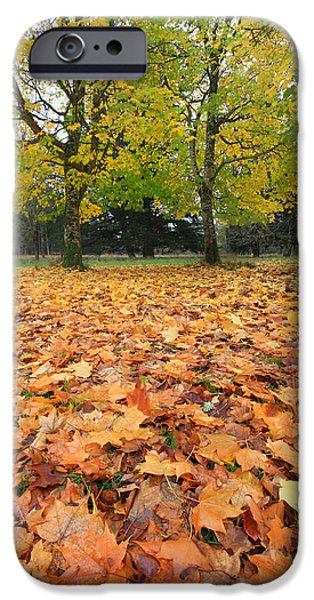 Red Carpet iPhone Cases - Autumns red carpet nature is the star iPhone Case by Pierre Leclerc Photography
