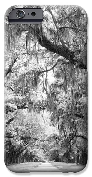Avenue of Oaks Charleston South Carolina iPhone Case by Stephanie McDowell