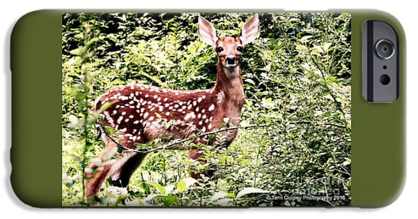 Young iPhone Cases - Babe In The Woods iPhone Case by Tami Quigley