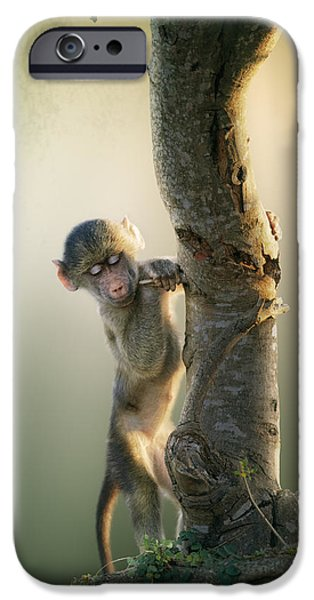 One Animal iPhone Cases - Baby Baboon in Tree iPhone Case by Johan Swanepoel