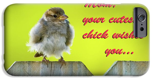 Baby Bird iPhone Cases - Baby bird iPhone Case by Betty LaRue