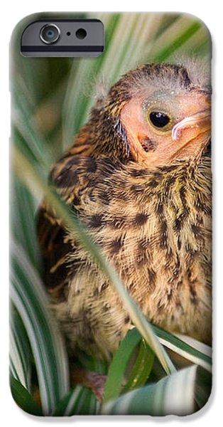 Baby Bird Hiding in Grass iPhone Case by Douglas Barnett