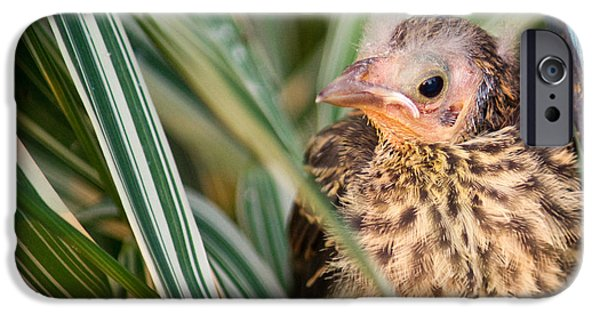 Baby Bird iPhone Cases - Baby Bird Peering Out iPhone Case by Douglas Barnett