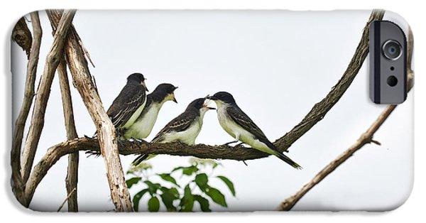 Baby Bird iPhone Cases - Baby Birds - Eastern Kingbird Family iPhone Case by Christina Rollo