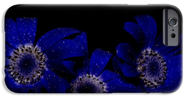 Pericallis iPhone Cases - Baby Bloomers iPhone Case by Glen  Towler