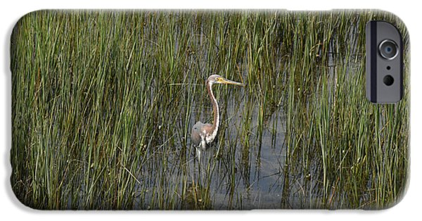 Nature Center Pond iPhone Cases - Baby Blue Heron Charleston SC iPhone Case by Joan Kaplan