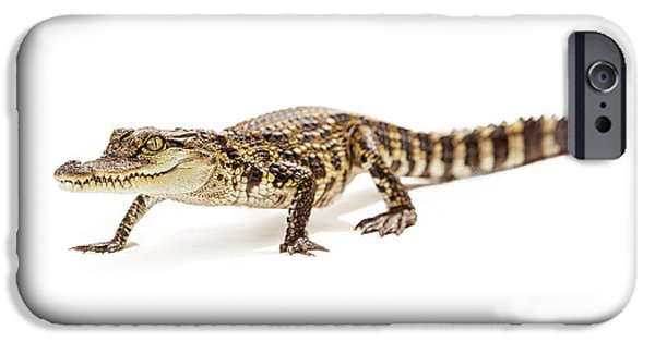 Wetland iPhone Cases - Baby crocodile walking forward iPhone Case by Susan  Schmitz