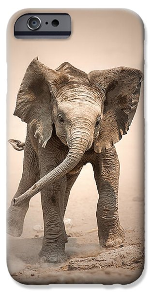 Elephants iPhone Cases - Baby Elephant mock charging iPhone Case by Johan Swanepoel