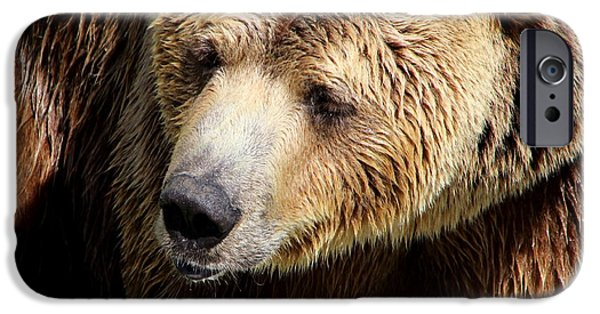 Wild Animals iPhone Cases - Sweet Sleepy Face iPhone Case by Fiona Kennard