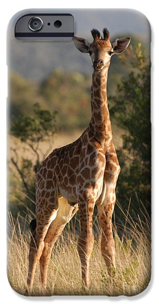 Giraffes iPhone Cases - Baby Giraffe iPhone Case by Andy Smy