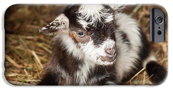 Farm Stand iPhone Cases - Baby Goat iPhone Case by Joye Ardyn Durham